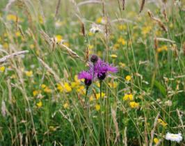 Garden Design - wild flower meadow