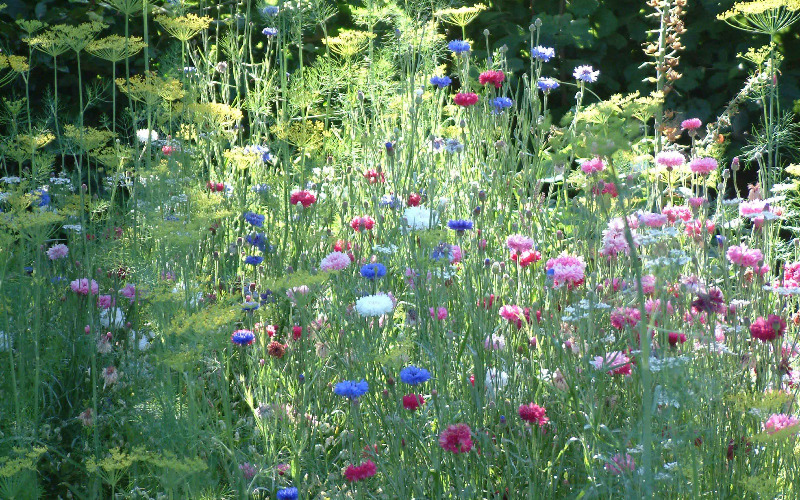 cottage garden designer in sussex, surrey, kent, london, the uk, Natural flower