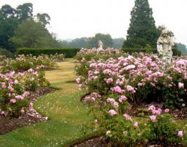 Traditional garden design for a rose garden