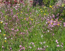 BREEAM garden design