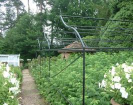 Bespoke garden Fruit Cage