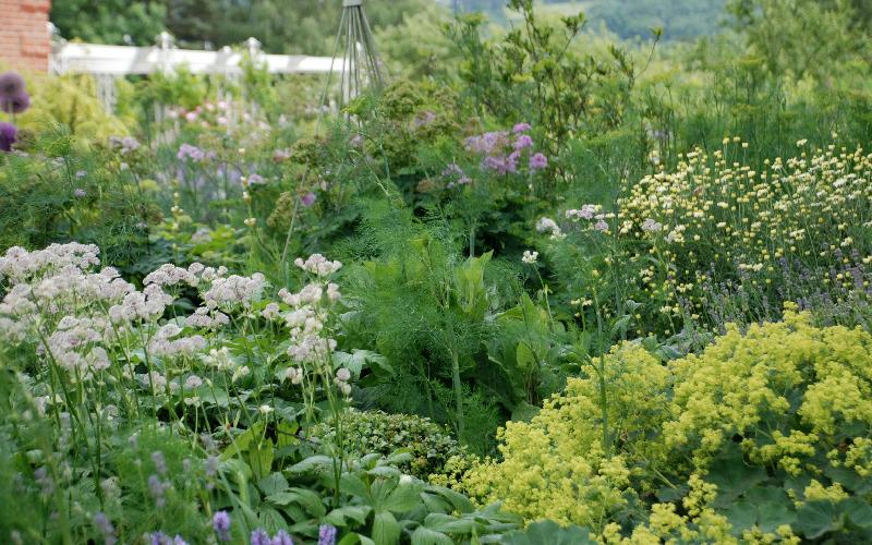 Herbaceous border