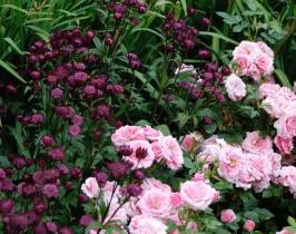 Garden Design - mixed border