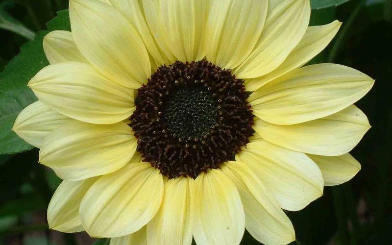 Garden consultant barry holdsworth offers gardener for Garden consultant