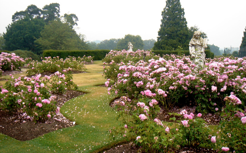 Traditional garden design for a rose garden