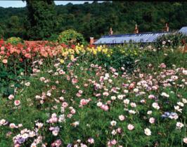 Kitchen Garden Designer planted this Walled Kitchen Garden