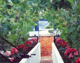 Kitchn Garden Designer - Melon pit greenhouse